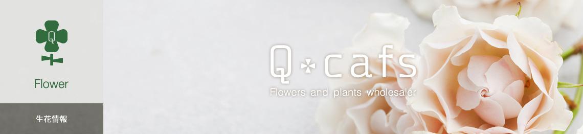 Q-cafs 生花情報